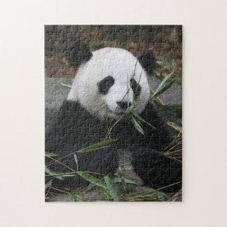 Pandas gigantes en la protección de la panda rompecabezas con fotos