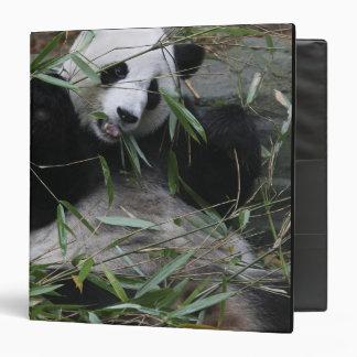 """Pandas gigantes en la protección y los 2 de la pan carpeta 1 1/2"""""""