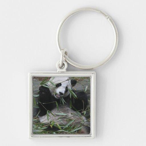 Pandas gigantes en la protección y los 2 de la pan llavero cuadrado plateado