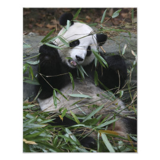 Pandas gigantes en la protección y los 2 de la pan arte con fotos