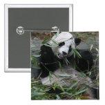 Pandas gigantes en la protección y los 2 de la pan pin