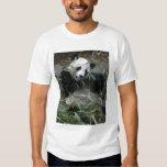 Pandas gigantes en la protección y los 2 de la poleras
