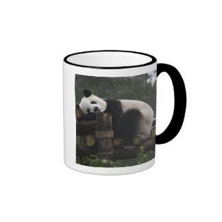 Pandas gigantes en la protección y los 3 de la pan tazas