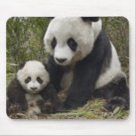 """pandas mouse pad<br><div class=""""desc"""">mom and baby panda</div>"""