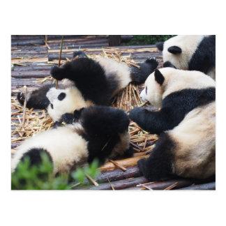 Pandas, postal de Chengdu, China