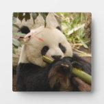 PandaSD001 Placas
