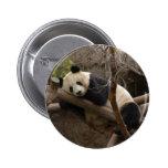 PandaSD003 Pin