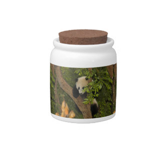 PandaSD004 Candy Jars