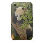 PandaSD004 iPhone 3 Case-Mate Cases