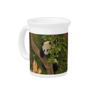 PandaSD004 Jarras Para Bebida