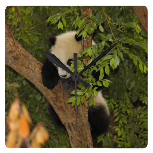 PandaSD004 Relojes De Pared