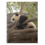 PandaSD006 Libros De Apuntes Con Espiral