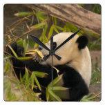 PandaSD008 Clocks