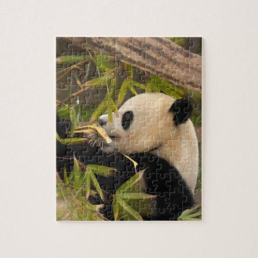 PandaSD008 Puzzles Con Fotos