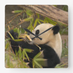 PandaSD008 Reloj De Pared
