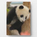 PandaSD009 Placa De Plastico