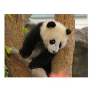 PandaSD009 Postcard