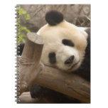 PandaSD010 Cuaderno