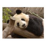 PandaSD010 Postal