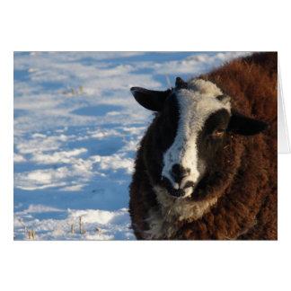 Pandi the Sheep Greeting Card