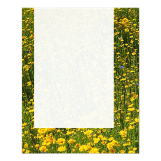 Panel 0114 - Field of Yellow Daisies Flyer