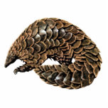 "Pangolin Cutout Magnet/Sculpture<br><div class=""desc"">A pangolin (aka a scaly anteater or tenggiling), have large scales covering their skin and are found in tropical regions of Africa and Asia. Pangolins are nocturnal animals, and use their well-developed sense of smell to find insects. The long-tailed pangolin is also active by day. Pangolins spend most of the...</div>"
