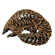 Pangolin Cutout Magnet/Sculpture