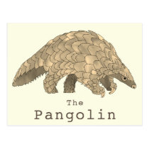Pangolin Wildlife Endangered Species Animal Art Postcard