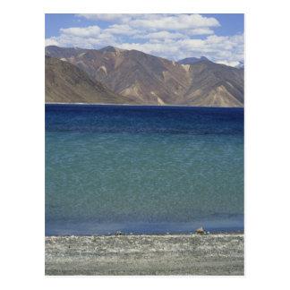 Pangong Lake, Ladakh, India Postcard