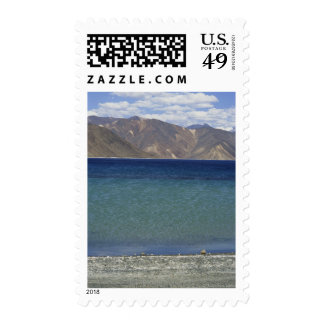 Pangong Lake, Ladakh, India Stamp