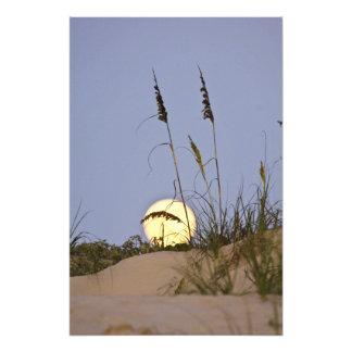 Paniculata de Uniola de la avena del mar) que crec Arte Fotográfico