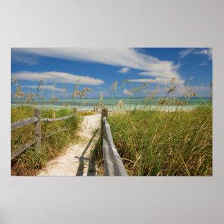 Paniculata de Uniola de la avena del mar) que crec Poster