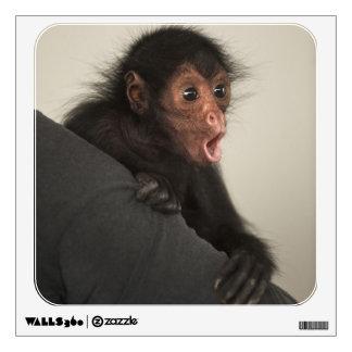 paniscus Rojo-hecho frente del Ateles del mono de