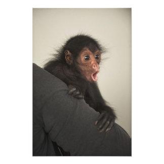 paniscus Rojo-hecho frente del Ateles del mono de  Arte Fotografico