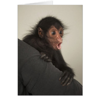 paniscus Rojo-hecho frente del Ateles del mono de Felicitaciones