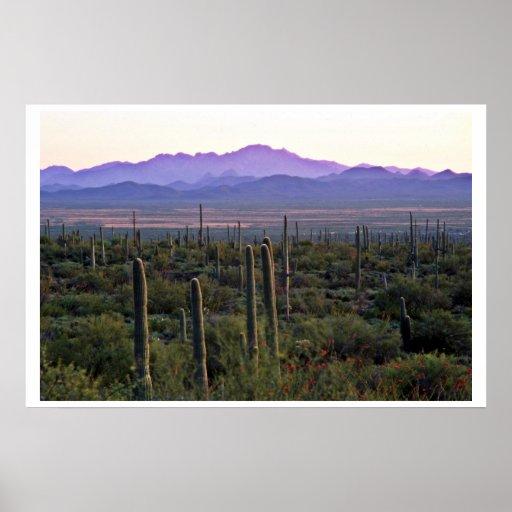 Panorama de la mañana detrás de Saguaros Impresiones
