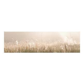 Panorama de las telas de araña en el heno en fotografías