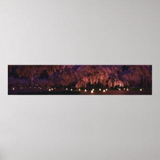 Panorama de Sakura (noche) Póster