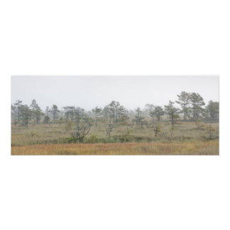 Panorama of a forest in a mist photo print