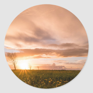 Panoramic view of a flowering  yellow daisy flower classic round sticker