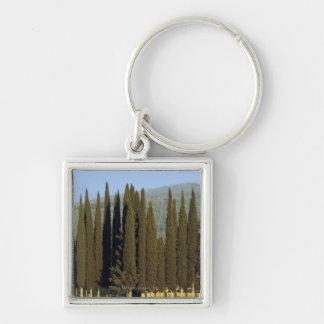 panoramic view of cypress trees near Siena Key Chains
