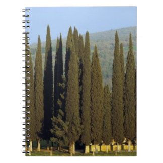 panoramic view of cypress trees near Siena Spiral Notebook