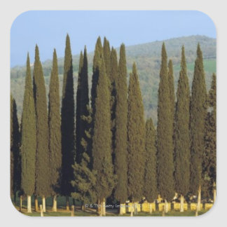panoramic view of cypress trees near Siena Square Sticker