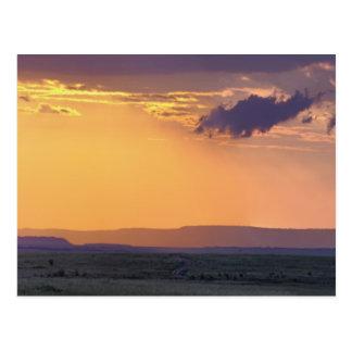 Panoramic view of single acacia tree at postcards