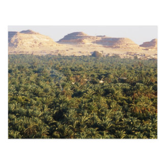 Panoramic View of the Palm Gardens in Siwa Oasis Postcard
