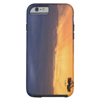 Panoramic view of Vulture and acacia tree Tough iPhone 6 Case
