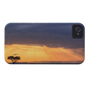Panoramic view of Vulture and acacia tree iPhone 4 Case-Mate Case