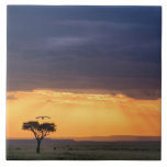 Panoramic view of Vulture and acacia tree Large Square Tile