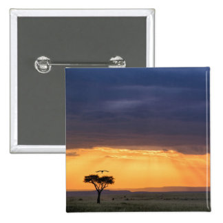Panoramic view of Vulture and acacia tree Pinback Button