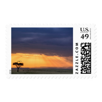 Panoramic view of Vulture and acacia tree Postage